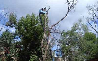 Спил и вырубка деревьев - Хабаровск, цены, предложения специалистов